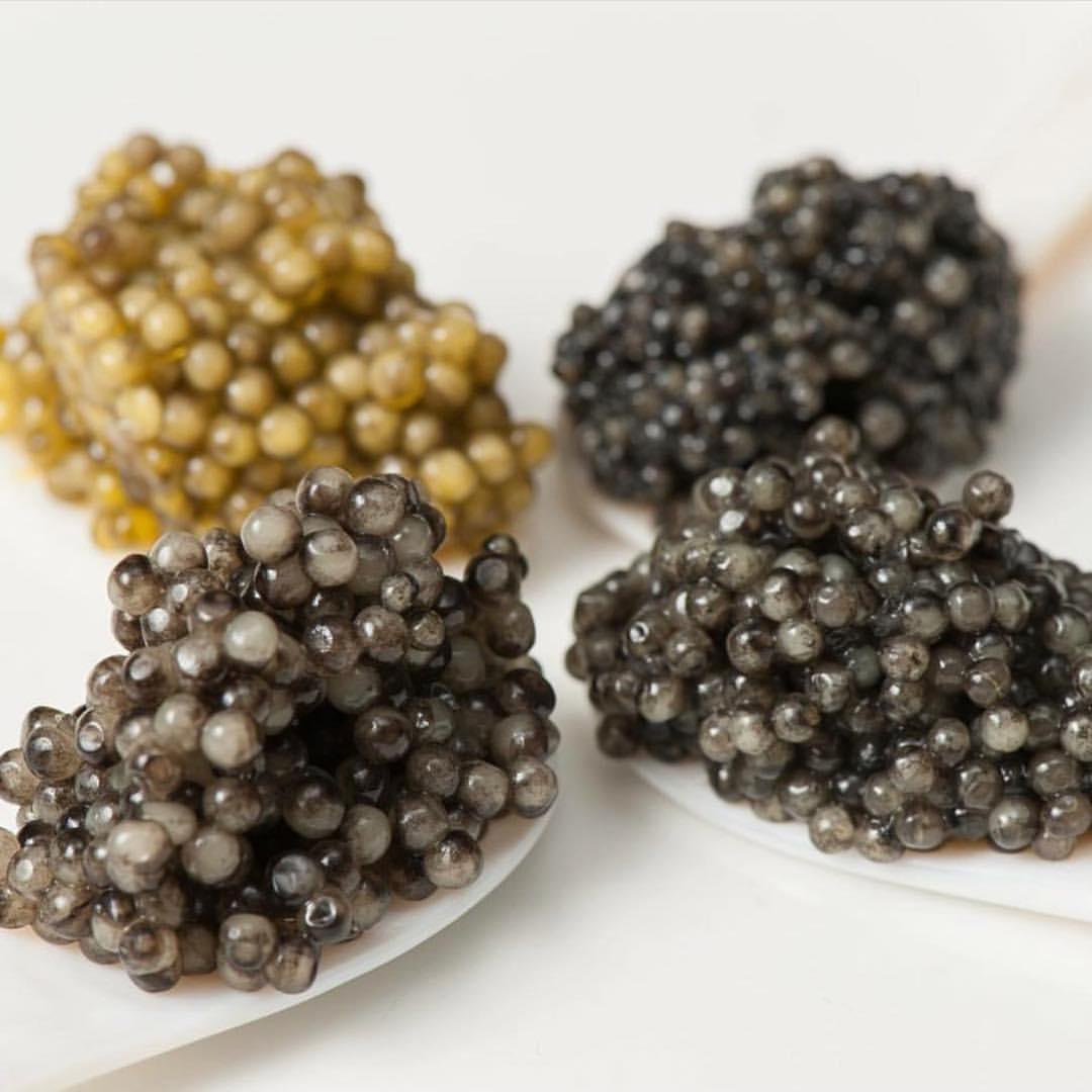 Iranian caviar exports rate 2017